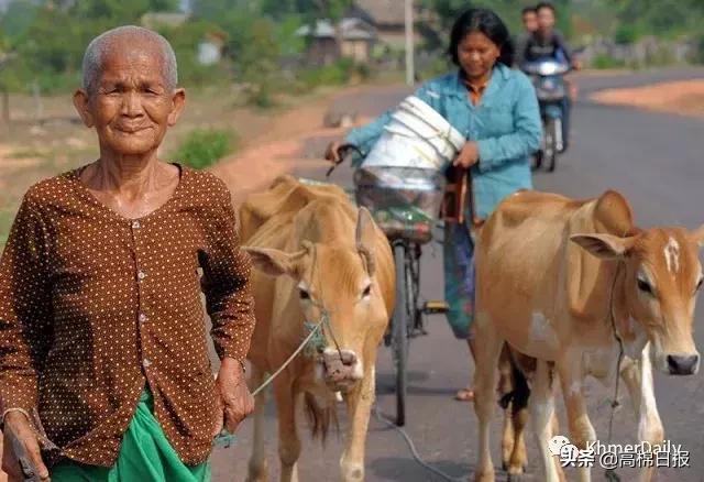 柬埔寨下周开始全国人口普查