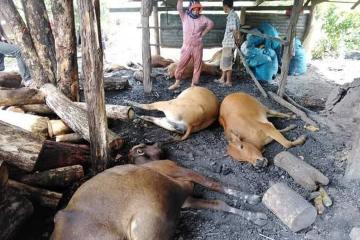 柬埔寨今年前5月因雷击导致35人死32人受伤