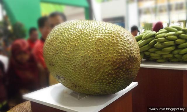 马来西亚拟向中国出口菠萝蜜